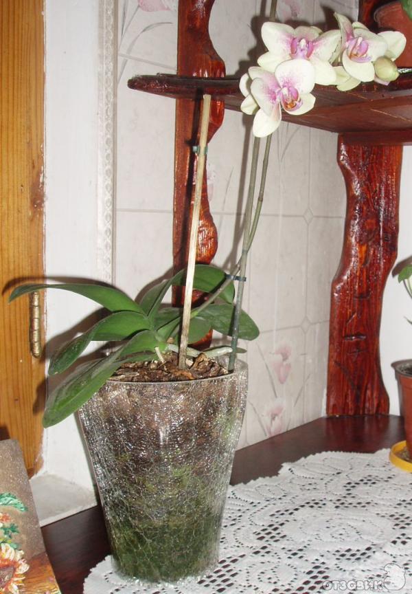 Горшки орхидеи в домашних условиях