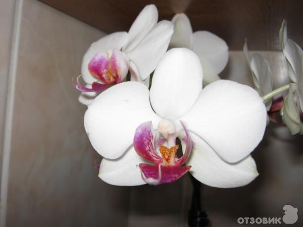 Комнатные цветущие растения фото 2649