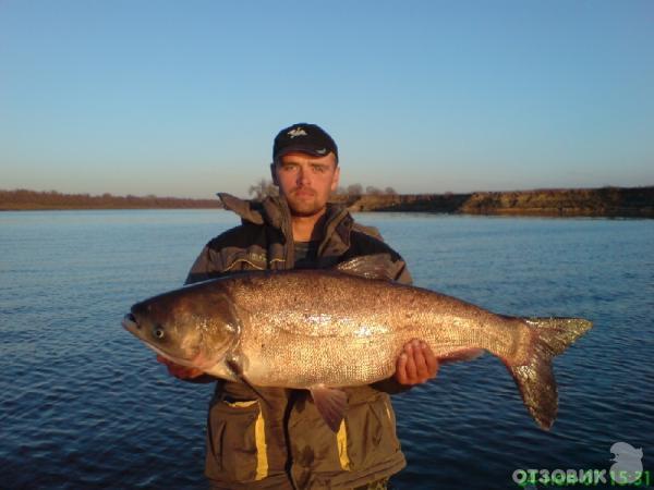 ахтуба харабали рыбалка дикарем