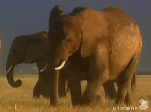 документальный фильм про слонов